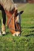 Portrait Of Horse; Autumn Portrait Of Horse; Young Horse, Horse,