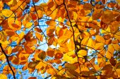 Yellow orange and red autumn foliage at sunny day poster
