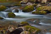 Mountain Trout Stream