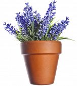 Herbal lavander bouquet in clay flowerpot isolated on white background