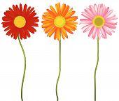 3 flowers.