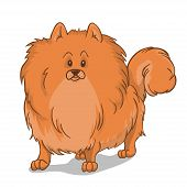 Pomeranian Dog Red