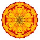 Orange Concentric Marigold Mandala Flower Isolated On White