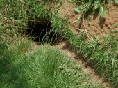 pic of rabbit hole  - Rabbit or Hare entrance hole to underground home - JPG