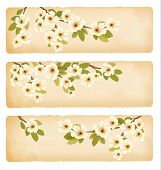 Three retro spring banners with blossoming tree brunch with spring flowers. Raster version