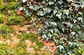 Creppers an moss