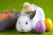 stock photo of easter bunnies  - Easter Concept - JPG