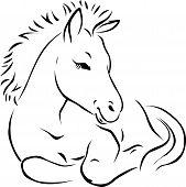 Foal - Black Outline Illustration