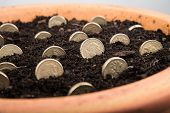 growing money in pot