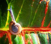 a snail on a colorful leaf done