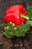 Sweet Pepper Red