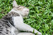 Close Up Sleep Cat On The Green Grass