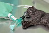 Veterinary, Cat Surgery
