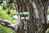 Green Hiking Sign On The Tree