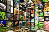 Inside The Nature Showroom