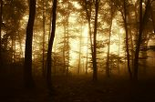 Enchanted woods at sunrise