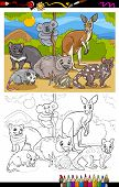 Marsupials Animals Cartoon Coloring Book