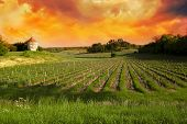 stock photo of bordeaux  - Vineyards of Saint Emilion Bordeaux Vineyards France - JPG