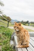 Ginger cat sit near the river in Kyoto, Japan.