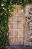 picture of creeper  - Old wooden yellow door surrounded with creeper - JPG