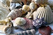 Collection Of Seashells.