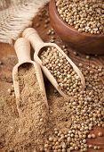 Coriander seeds and powdered coriander