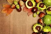 chestnuts autumn frame background