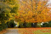 Fall In A Park