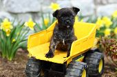 Adorable puppy sitting on classic toy dump truck