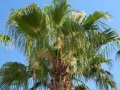 Tropical Green Palm Leaf Over Blue Sky Background