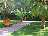 Tropical Green Park With Palms And Bench