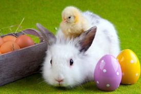 foto of bunny rabbit  - Easter Concept - JPG
