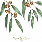 Watercolor Eucalyptus Leaves