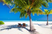 Deck chairs under umbrellas and palm trees on a tropical beach