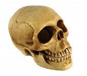 Human Skull Shaped Casket