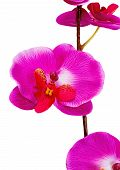 Artificial Orchid Flower On White Background.