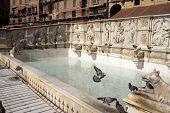 Fonte Gaia in Siena