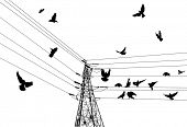 illustration with electrical pylon and birds isolated on white background