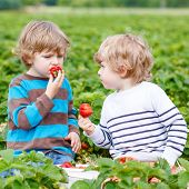 image of strawberry blonde  - Two little friends having fun on strawberry farm in summer - JPG