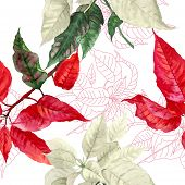 Seamless pattern  with red poinsettia plant-02