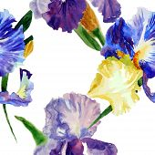 Seamless pattern  with color irises1-03
