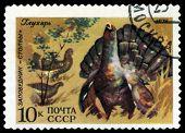 Vintage  Postage Stamp. Old Squaw.