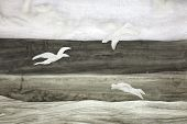 Seagulls Over The Ocean