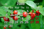 Calendar For June Of 2015 Year With Red Berries Of Tomentosa