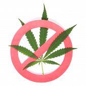 Hemp (cannabis) Drugs Interdiction