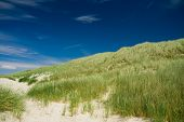 picture of dune grass  - green dune grass and a blue sky - JPG