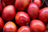 New Zealand Evergreen Tree Fruit Vegetable, Tamarillo