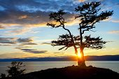 Tree during Sunset on Lake Baikal
