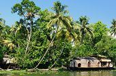picture of alleppey  - Coco trees reflection and beautifoull house boat at back waters of Kerala India - JPG