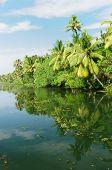 stock photo of alleppey  - Coco trees reflection at back waters of Kerala India